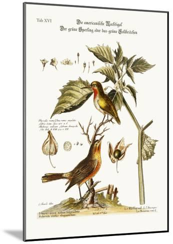 The American Nightingale. the Green Sparrow or Green Hummingbird, 1749-73-George Edwards-Mounted Giclee Print