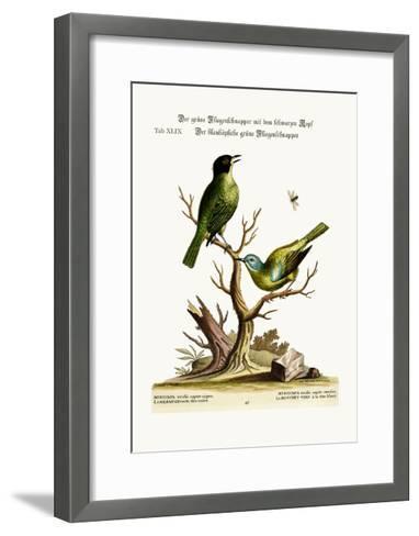 The Green Black-Cap Flycatcher. the Blue-Headed Green Flycatcher, 1749-73-George Edwards-Framed Art Print
