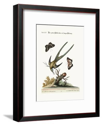 The Long-Tailed Green Hummingbird, 1749-73-George Edwards-Framed Art Print