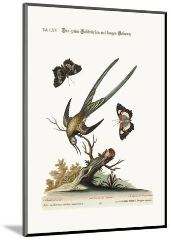 The Long-Tailed Green Hummingbird, 1749-73-George Edwards-Mounted Giclee Print