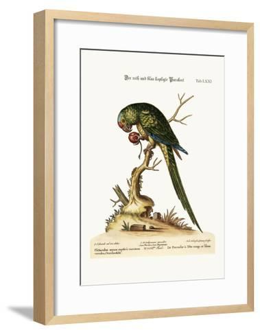 The Red and Blue-Headed Parrakeet, 1749-73-George Edwards-Framed Art Print