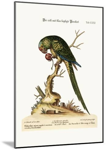 The Red and Blue-Headed Parrakeet, 1749-73-George Edwards-Mounted Giclee Print