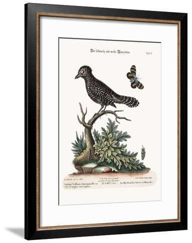 The Black and White Butcher-Bird, 1749-73-George Edwards-Framed Art Print