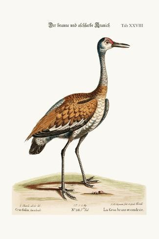 The Brown and Ash-Coloured Crane, 1749-73-George Edwards-Stretched Canvas Print