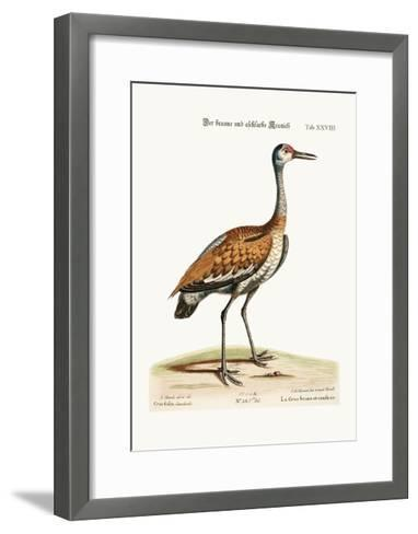 The Brown and Ash-Coloured Crane, 1749-73-George Edwards-Framed Art Print