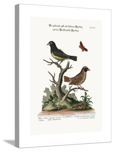 The Black and Yellow Frizled Sparrow, and the Brasilian Sparrow, 1749-73-George Edwards-Stretched Canvas Print