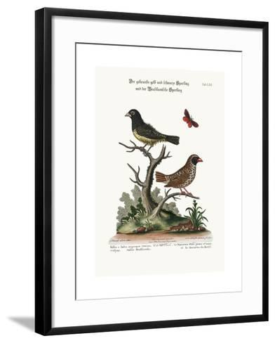 The Black and Yellow Frizled Sparrow, and the Brasilian Sparrow, 1749-73-George Edwards-Framed Art Print
