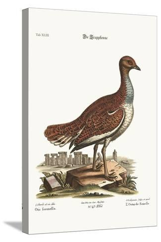 The Hen Bustard, 1749-73-George Edwards-Stretched Canvas Print