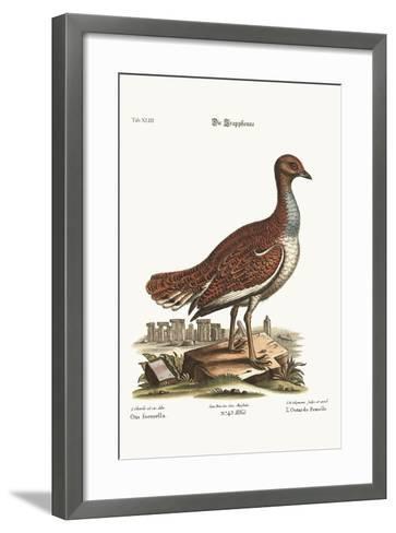The Hen Bustard, 1749-73-George Edwards-Framed Art Print