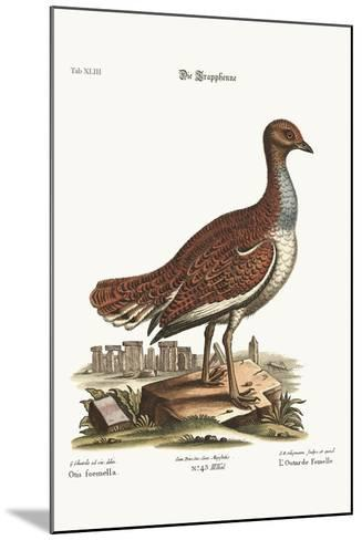 The Hen Bustard, 1749-73-George Edwards-Mounted Giclee Print