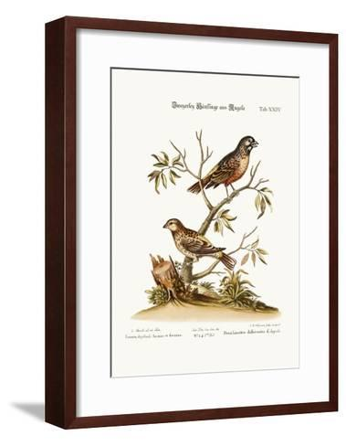 Two Sorts of Linnets from Angola, 1749-73-George Edwards-Framed Art Print
