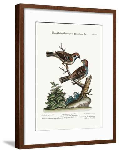 Mountain Sparrows, Cock and Hen, 1749-73-George Edwards-Framed Art Print