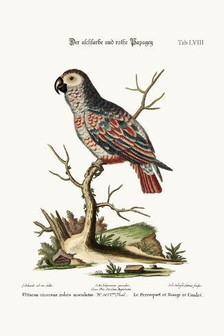 The Ash-Coloured and Red Parrot, 1749-73-George Edwards-Stretched Canvas Print