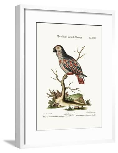 The Ash-Coloured and Red Parrot, 1749-73-George Edwards-Framed Art Print
