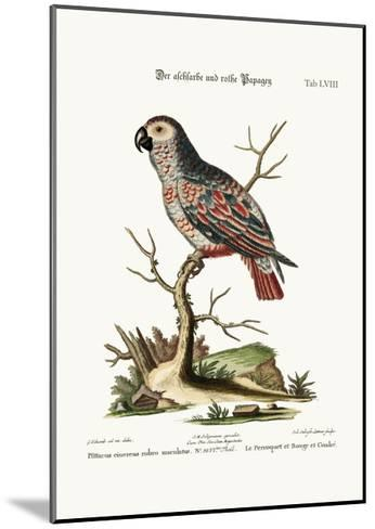 The Ash-Coloured and Red Parrot, 1749-73-George Edwards-Mounted Giclee Print