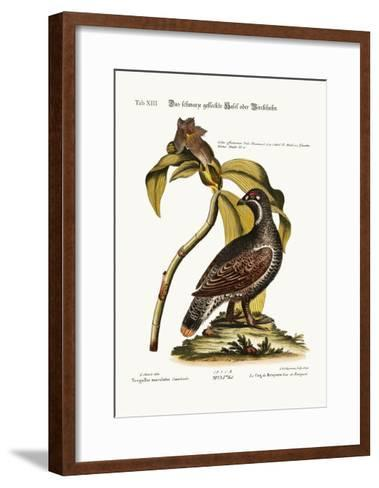 The Black and Spotted Heathcock, 1749-73-George Edwards-Framed Art Print