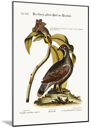 The Black and Spotted Heathcock, 1749-73-George Edwards-Mounted Giclee Print