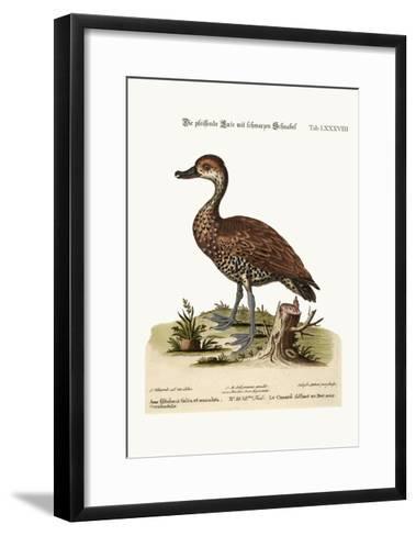 The Black-Billed Whistling Duck, 1749-73-George Edwards-Framed Art Print