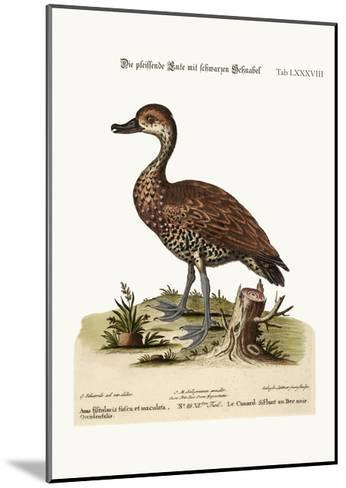 The Black-Billed Whistling Duck, 1749-73-George Edwards-Mounted Giclee Print