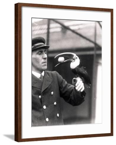 A Toucan Holds an Egg in its Mouth on the Arm of a Keeper, 1924-Frederick William Bond-Framed Art Print