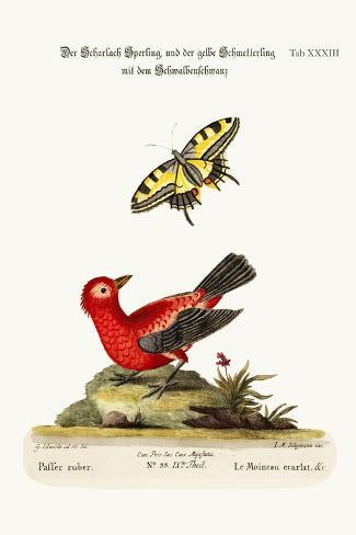 The Scarlet Sparrow and the Yellow Swallow-Tailed Butterfly, 1749-73-George Edwards-Stretched Canvas Print