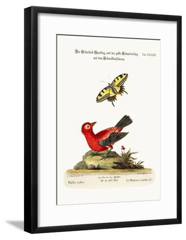 The Scarlet Sparrow and the Yellow Swallow-Tailed Butterfly, 1749-73-George Edwards-Framed Art Print