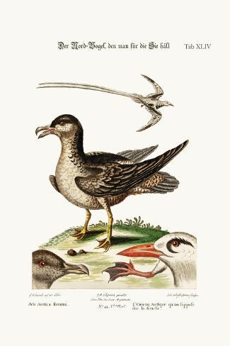 The Arctick Bird, Supposed to Be the Hen, the Tropick Bird, 1749-73-George Edwards-Stretched Canvas Print