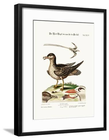 The Arctick Bird, Supposed to Be the Hen, the Tropick Bird, 1749-73-George Edwards-Framed Art Print