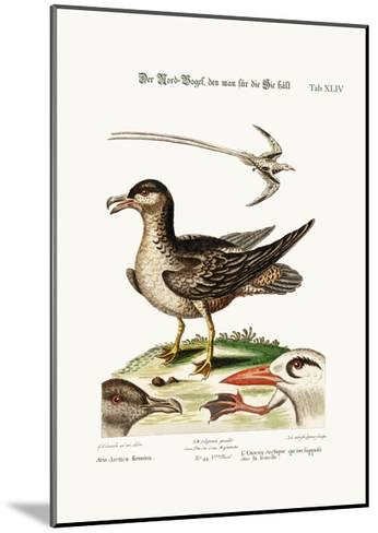 The Arctick Bird, Supposed to Be the Hen, the Tropick Bird, 1749-73-George Edwards-Mounted Giclee Print