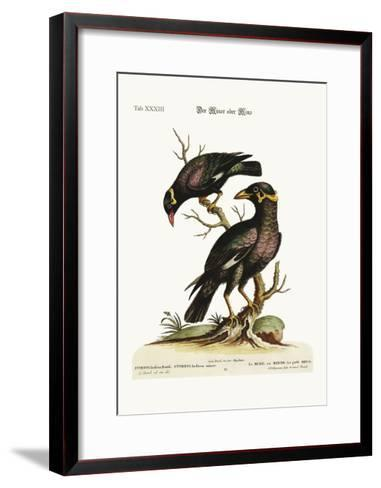 The Minor or Mino, Greater and Less, 1749-73-George Edwards-Framed Art Print