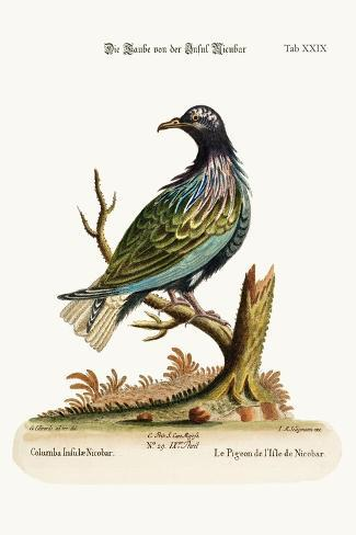 The Pigeon from the Isle of Nicobar, 1749-73-George Edwards-Stretched Canvas Print