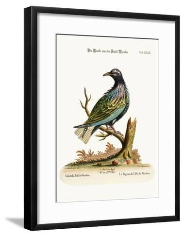 The Pigeon from the Isle of Nicobar, 1749-73-George Edwards-Framed Art Print