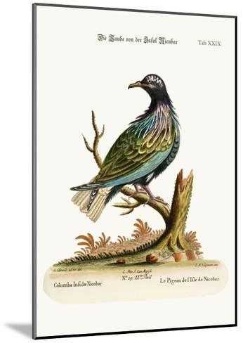 The Pigeon from the Isle of Nicobar, 1749-73-George Edwards-Mounted Giclee Print