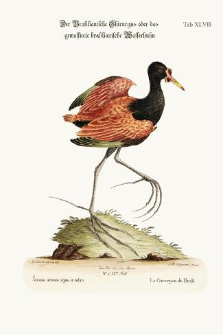 The Spur-Winged Water-Hen of Brasil, 1749-73-George Edwards-Stretched Canvas Print