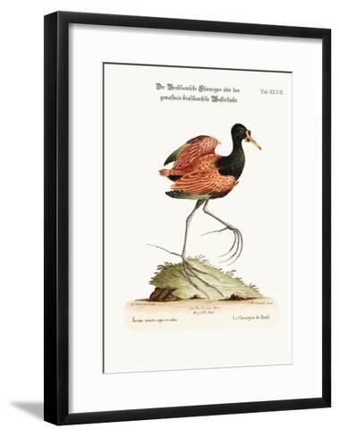 The Spur-Winged Water-Hen of Brasil, 1749-73-George Edwards-Framed Art Print