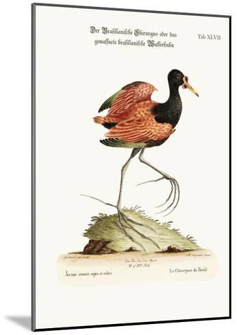 The Spur-Winged Water-Hen of Brasil, 1749-73-George Edwards-Mounted Giclee Print