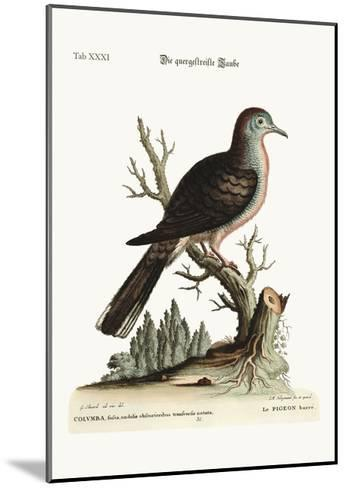 The Transverse Stripe or Bared Dove, 1749-73-George Edwards-Mounted Giclee Print
