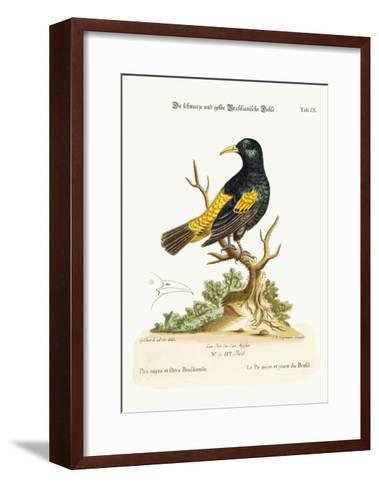 The Black and Yellow Daw of Brasil, 1749-73-George Edwards-Framed Art Print