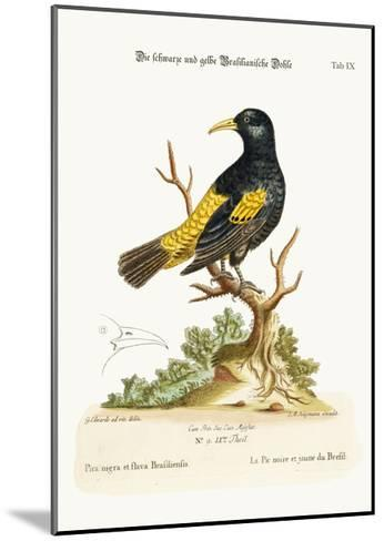 The Black and Yellow Daw of Brasil, 1749-73-George Edwards-Mounted Giclee Print