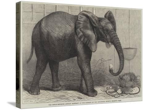 The Newly-Imported African Elephant at the Gardens of the Zoological Society, Regent's Park-Friedrich Wilhelm Keyl-Stretched Canvas Print