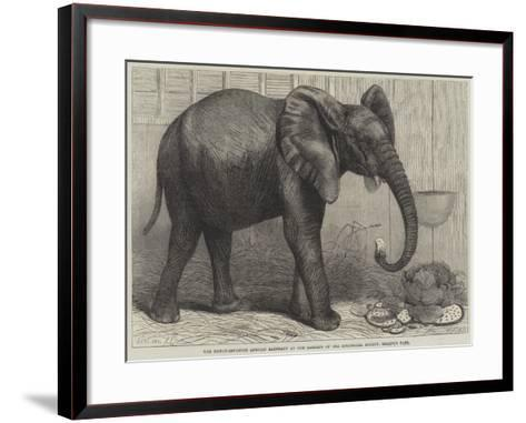 The Newly-Imported African Elephant at the Gardens of the Zoological Society, Regent's Park-Friedrich Wilhelm Keyl-Framed Art Print
