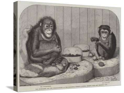 The Chimpanzee and the Ourang-Outang at the Zoological Society's Gardens, Regent's Park-Friedrich Wilhelm Keyl-Stretched Canvas Print