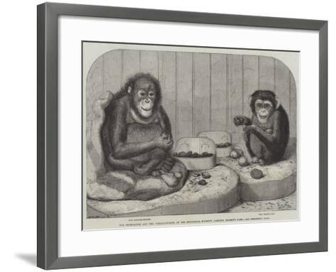 The Chimpanzee and the Ourang-Outang at the Zoological Society's Gardens, Regent's Park-Friedrich Wilhelm Keyl-Framed Art Print