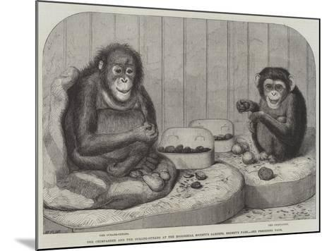 The Chimpanzee and the Ourang-Outang at the Zoological Society's Gardens, Regent's Park-Friedrich Wilhelm Keyl-Mounted Giclee Print