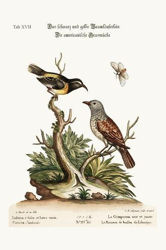 The Black and Yellow Creeper. the American Hedge-Sparrow, 1749-73-George Edwards-Stretched Canvas Print