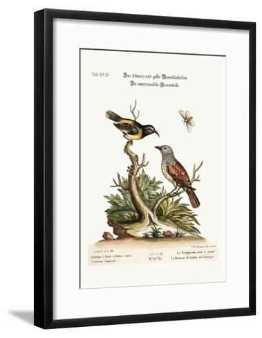 The Black and Yellow Creeper. the American Hedge-Sparrow, 1749-73-George Edwards-Framed Art Print