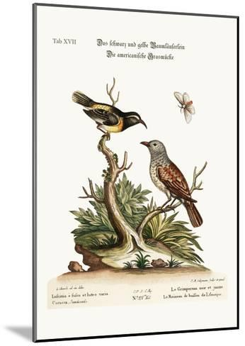 The Black and Yellow Creeper. the American Hedge-Sparrow, 1749-73-George Edwards-Mounted Giclee Print
