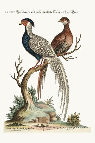 The Black and White Chinese Cock Pheasant with its Hen, 1749-73-George Edwards-Stretched Canvas Print