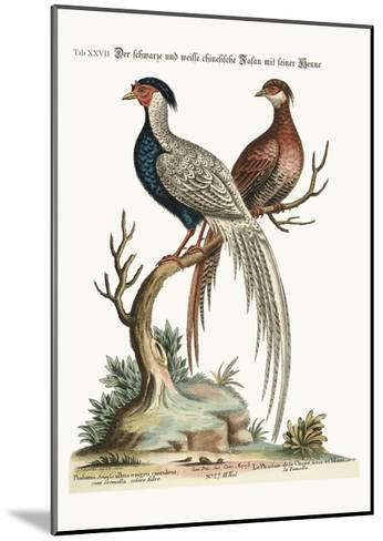 The Black and White Chinese Cock Pheasant with its Hen, 1749-73-George Edwards-Mounted Giclee Print