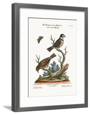 The Collared Finch, and the Green Goldfinch, 1749-73-George Edwards-Framed Art Print